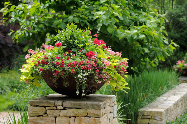 Large round cement pot full of various colors of petunia with trees and grass in background.