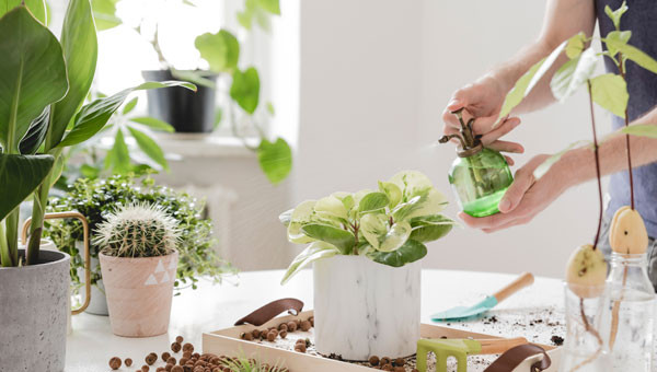 Free Potting of Houseplants with purchase of houseplant, pot or combination of both