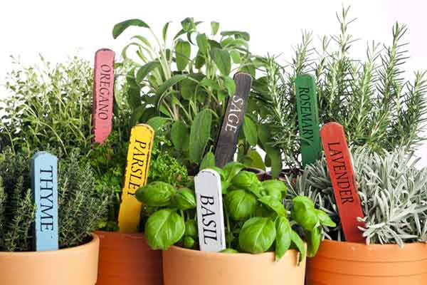 Seven different herbs in clay pots and colored metal herb tags in each pot.